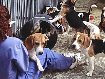 Studie: Det er en stor fejl at bruge dyr i medicinforsøg