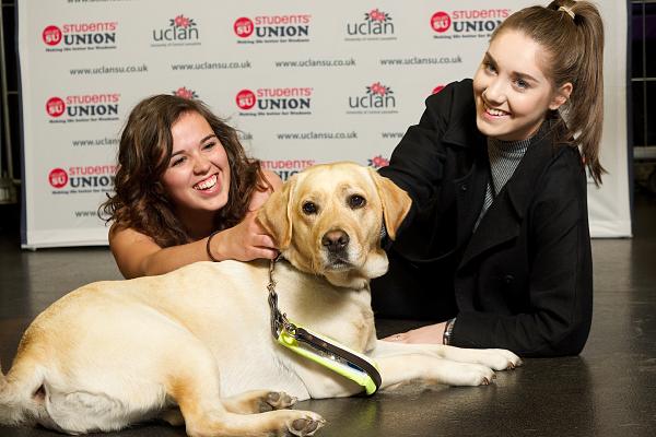 Studerende på et britisk universitet får mulighed for at falde til ro med hunde. Genrefoto: Pixabay