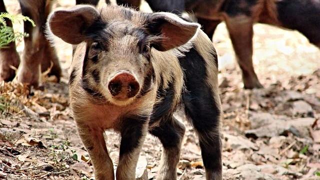 Hver fjerde dansker vil skære ned på indtagelsen af forarbejdet kød eller kød generelt. Foto: Pixabay
