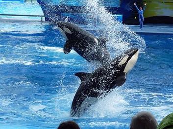 SeaWorld sagsøger Californien