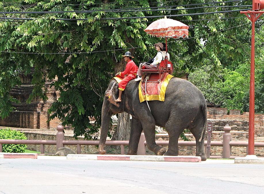 elephant2_edited.jpg