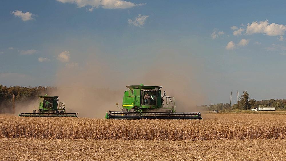 Der er behov for at gentænke det industrielle landbrug, mener lederen af en af verdens største dyreværnsorganisationer. Foto: United Soybean Board/flickr