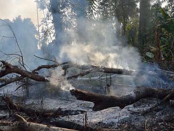 Peru ændrer loven i kampen mod rydning af regnskoven: Vi tog fejl