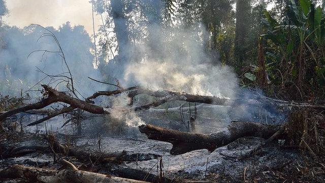 Skovområder ryddes bl.a. ved at brænde træerne. Regeringen i Peru vil nu stoppe den omfattende rydning af landets regnskov. Foto: diversityphotos/flickr