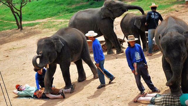 Bag dyreshows med fx dresserede elefanter står en millionindustri præget af dyremishandling, viser en ny rapport. Foto: Adam/flickr