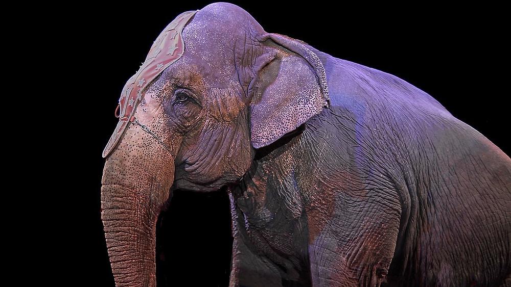 Elefanterne vender tilbage til Melha Shrine Circus. Modelfoto: Pixabay