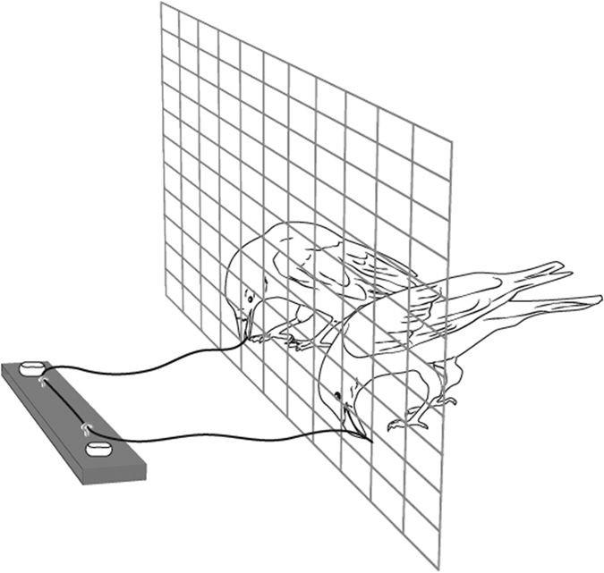 Kun ved at samarbejde kunne ravnene få fat i osten uden for deres bur. Illustration: Nadja Kavcik-Graumann