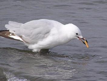 Millioner af cigaretskodder truer havets dyr