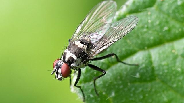Insekter har også evnen til at være bevidste, viser ny forskning. Foto: Pixabay