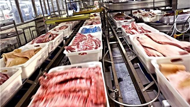 Det gavner eksporten og ikke dyrevelfærden, når regeringen vil indføre et dyrevelfærdsmærke, mener landbrugsorganisationen Frie Bønder - Levende Land. Foto: Danish Crown