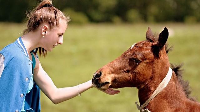Heste kommunikerer med mennesker ved at søge øjenkontakt og derefter give tegn til, hvad de ønsker. Foto: Pixabay