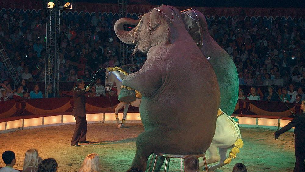 Vilde dyr såsom elefanter forbydes nu i underholdningsbranchen i San Francisco.
