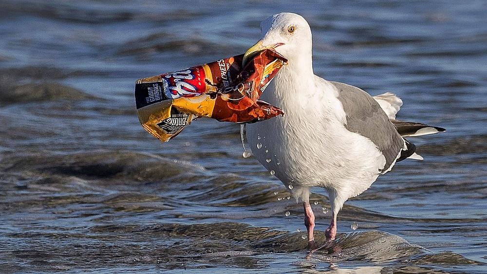 En ny resolution skal rådgive nationer om, hvordan de kan tackle plastforurening. Foto: Ingrid Taylar/flickr