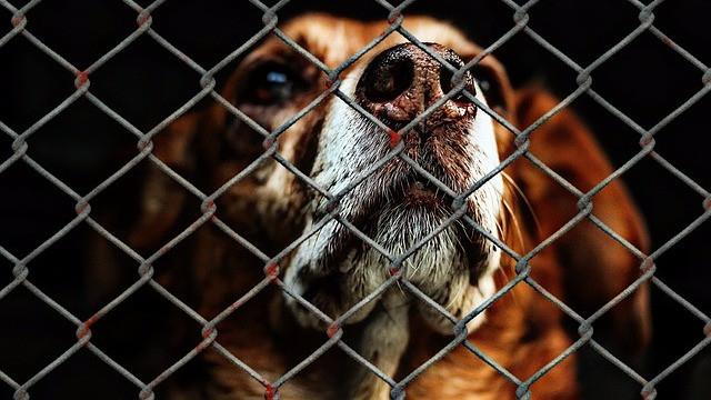 Fra 1. juli bliver strafferammen for grov dyremishandling fordoblet. Foto: Pixabay