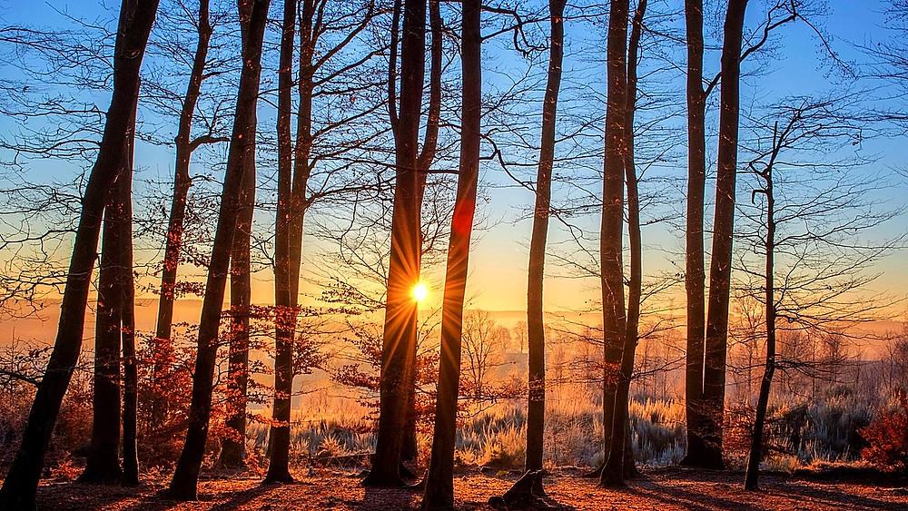 Alternativet vil plante en skov i Struer Kommune, hvor biodiversiteten har det særligt svært. Foto: Pixabay