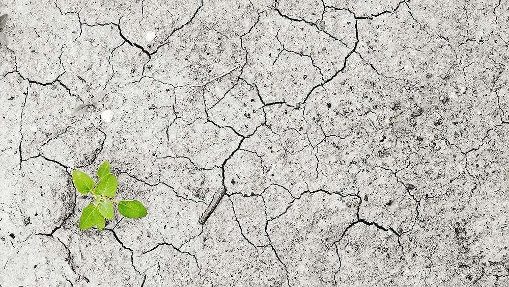 Sidst CO2-niveauet var så højt, var for ca. tre mio. år siden, da der var 3C-4C grader varmere. Foto: Pixabay