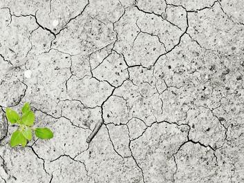 Indblik i fortiden viser markant klimaændring forude