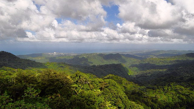 Et nyt projekt skal genskabe 100 mio. hektar skov i Afrika. Foto: Pixabay