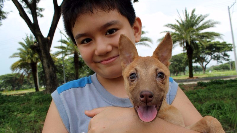 10-årige Ken Amante driver sit eget dyreinternat på Filippinerne. Foto: Happy Animals Club