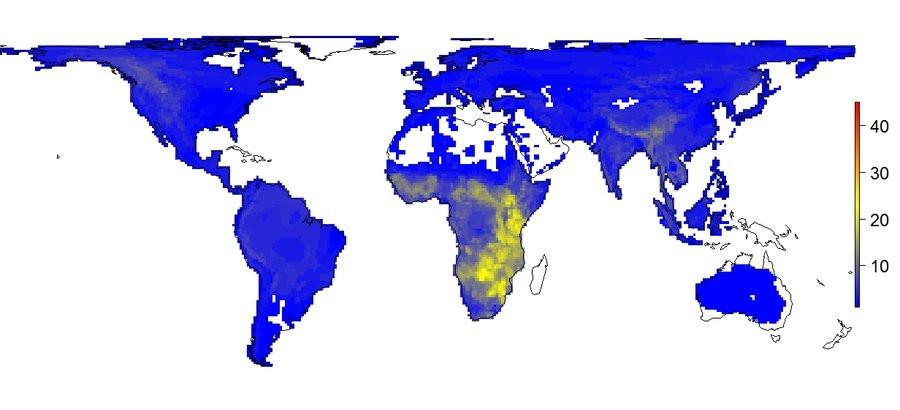Den gule farve viser udbredelsen af store pattedyr i en verden med mennesker. Illustration: Søren Faurby