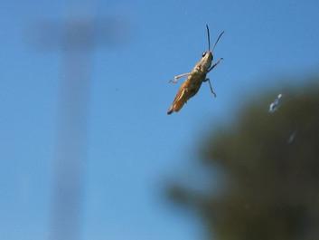 Undersøgelser viser markant færre udsplattede insekter på bilerne