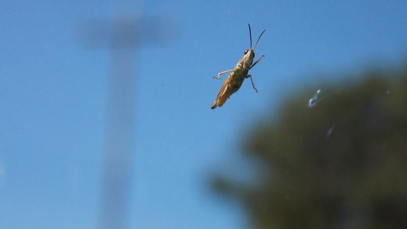 Et insekt sidder på forruden af en bil