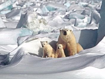 Forsker: Klimaforandringer kan nå farligt punkt om et årti
