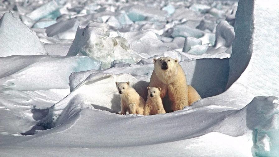 Om et årti kan den globale opvarmning have nået et punkt, hvor smeltningen af isen vil accelerere. Foto: Pixabay