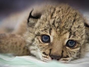 Gennembrud for stærkt truet dyreart