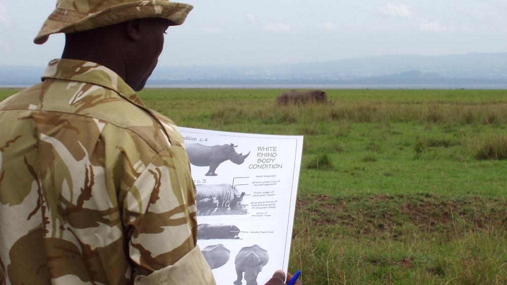 Der findes kun fem nordlige hvide næsehorn tilbage i verden. OBS: Dette foto er ikke relateret til denne historie om det nordlige hvide næsehorn. Foto: Karl Stromayer/USFWS