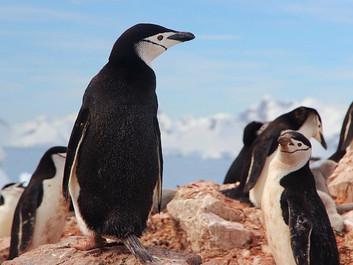 Polarisen smelter hastigt - forskere foreslår drastisk tiltag
