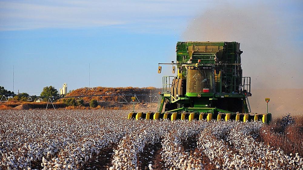 Bomuldsproduktionen er både miljø- og klimabelastende. Det skal man tage højde for, når staten indkøber tøj, mener Alternativet. Foto: Kimberly Vardeman/flickr
