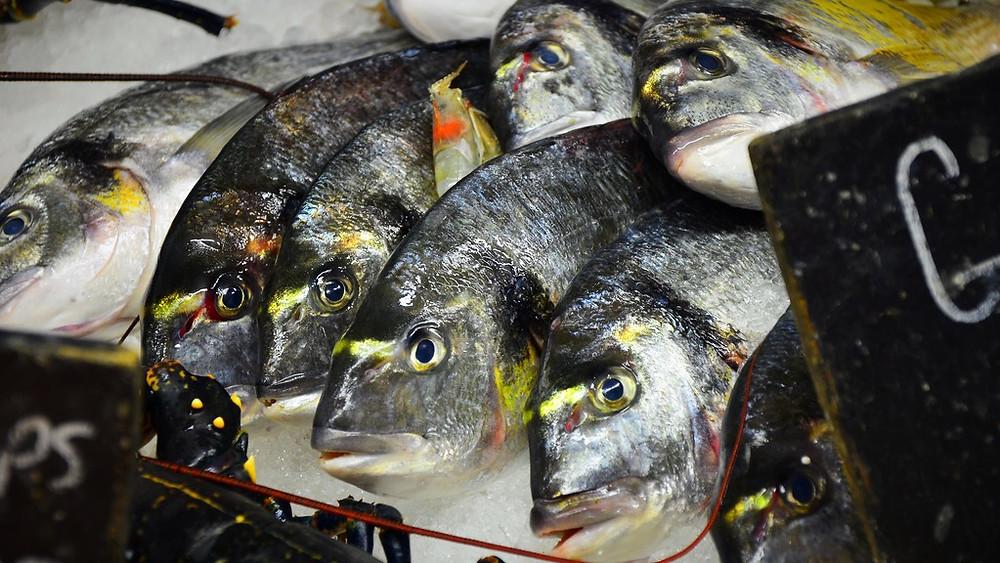 Mange fiskebestande har mistet de ældre individer på grund af fiskeri - det kan destabilisere dem. Foto: Ben Sutherland/flickr