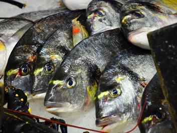 Forskere advarer: Industrifiskeri fjerner ældre fisk fra havet
