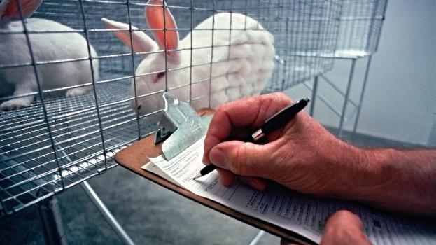 300.000 dyr bliver hvert år i Kina udsat for forsøg med skønhedsprodukter og efterfølgende aflivet. Foto: USDA/Wikimedia Commons