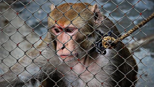 Dyremishandling skal straffes hårdere, mener miljø- og fødevareminister Eva Kjer Hansen. Foto: Pixabay
