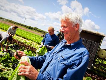 Alternativet: Al offentlig mad skal være økologisk