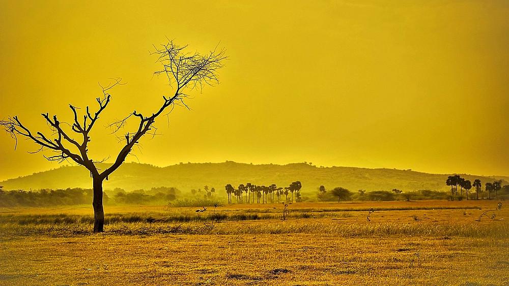 Den globale opvarmning og de medfølgende klimaforandringer vil ændre Jordens landskab, advarer forskere i et nyt studie. Foto: Pixabay