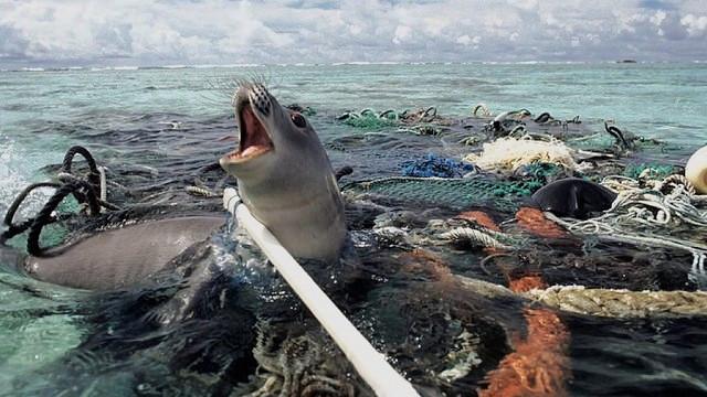 Vores ligegyldighed over for naturen er ved at slå havlivet ihjel. Foto: Nels Israelson/flickr