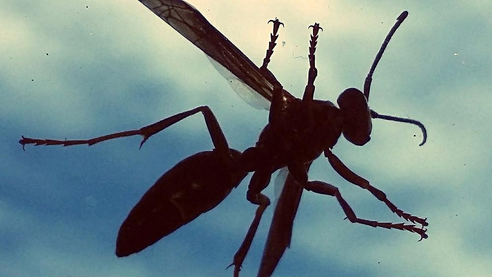 Færre insekter rammer bilernes forrude - årsagen er ikke påvist, men insektgifte er blandt de mistænkte syndere. Foto: Pixabay