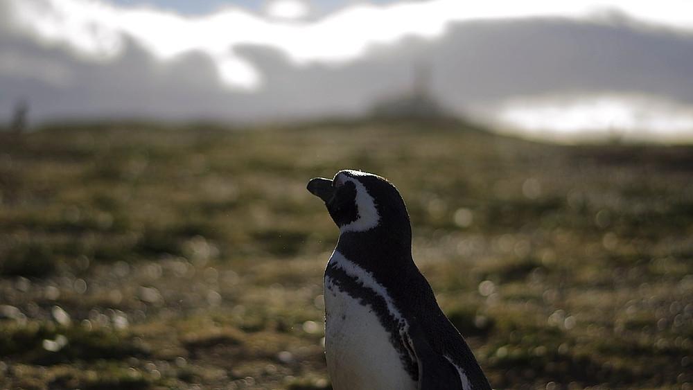 Havisen ved Antarktis er på tilbagetog. Området har ellers hidtil været forskånet for den globale opvarmning. Foto: Pixabay