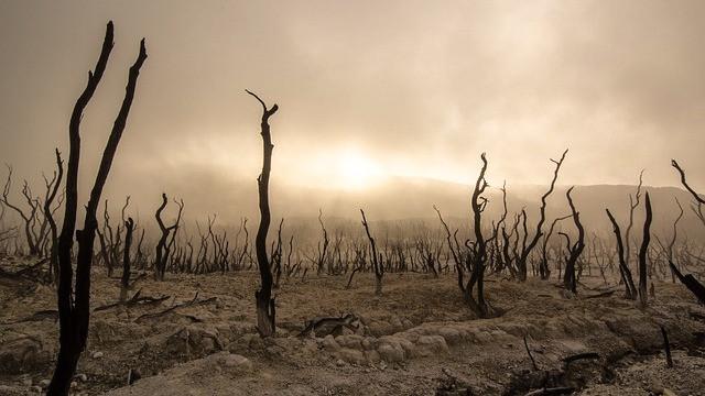 Bliver kloden eksempelvis seks grader varmere, vil regnskoven sandsynligvis blive omdannet til ørken. Foto: Pixabay