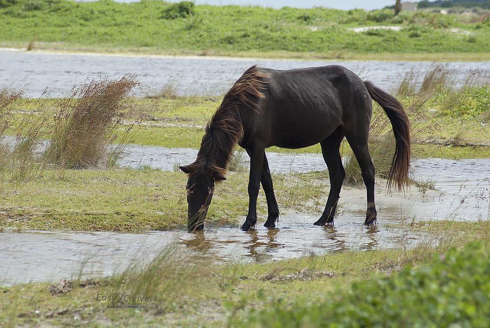 heste.jpg