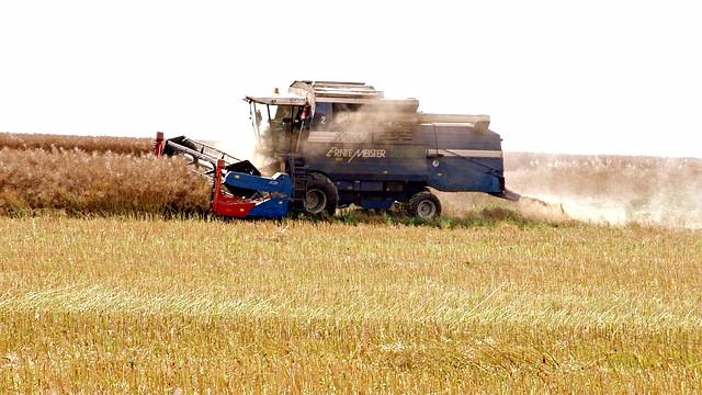 En ny metode til at udvinde proteiner fra planter kan gøre landbruget mere bæredygtigt. Foto: Pixabay