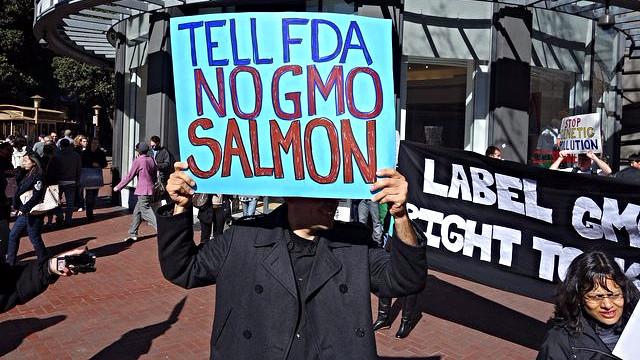 Der var demonstrationer mod den genmodificerede laks, før FDA traf beslutningen om at godkende den. Foto: Steve Rhodes/flickr