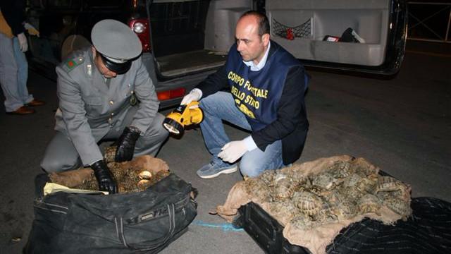 300 personer er blevet anholdt i en global aktion mod illegal dyrehandel. Foto: Europol