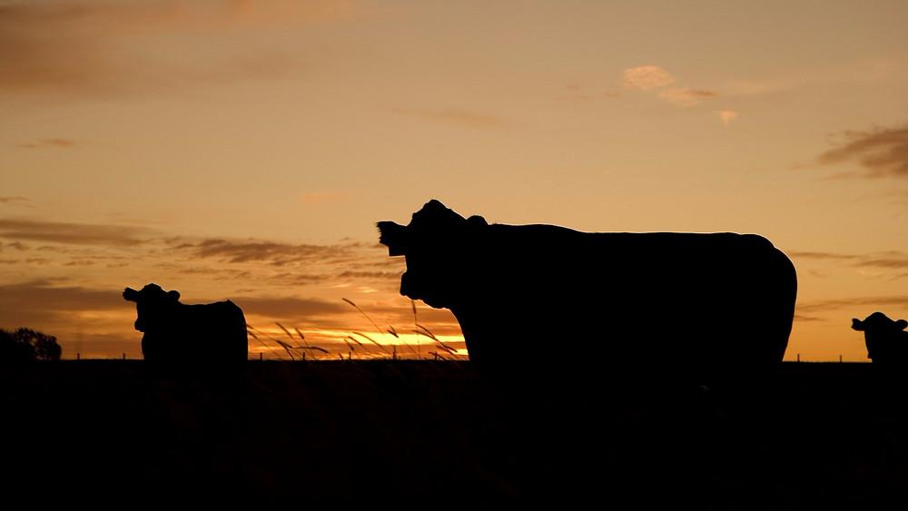 Landbrugsorganisationer vil have, at forskere fra Aarhus Universitet bliver fritstillet som rådgivere for Miljø- og Fødevareministeriet. Foto: Pixabay