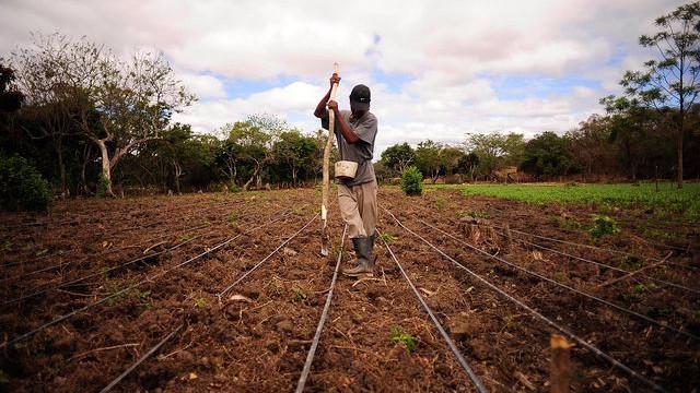 Klimaforandringerne og befolkningstilvæksten øger presset på landbrugsproduktionen. Foto: Neil Palmer (CIAT)
