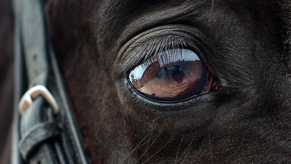 En hest er blevet angrebet med knivstik, og hvad der sandsynligvis er en hammer. Modelfoto: Pixabay