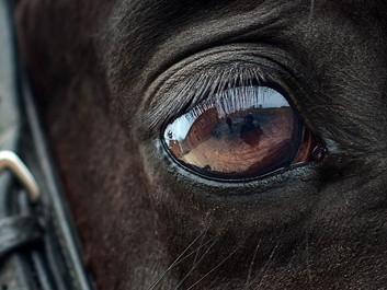 Hest er i kritisk tilstand efter at være blevet angrebet med hammer og kniv